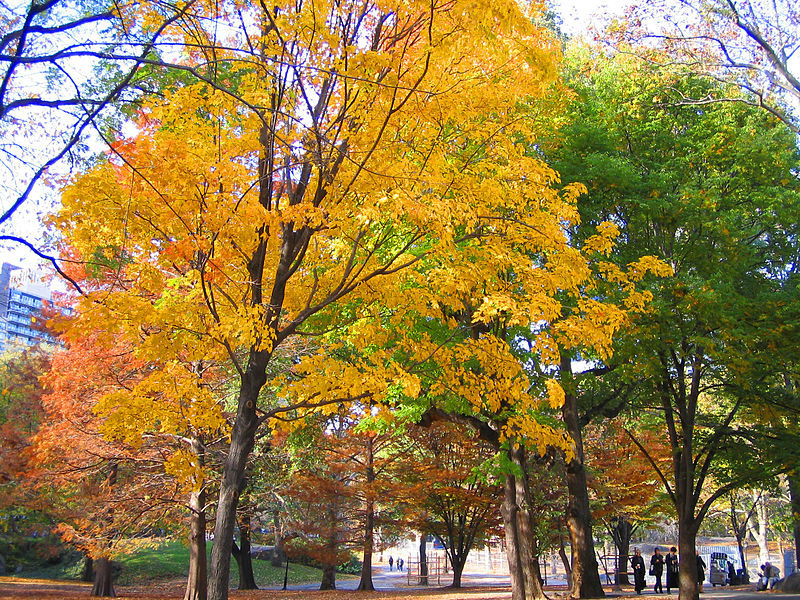800px-Central_Park_in_the_fall_-_panoramio