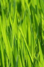 grass-2312139_960_720